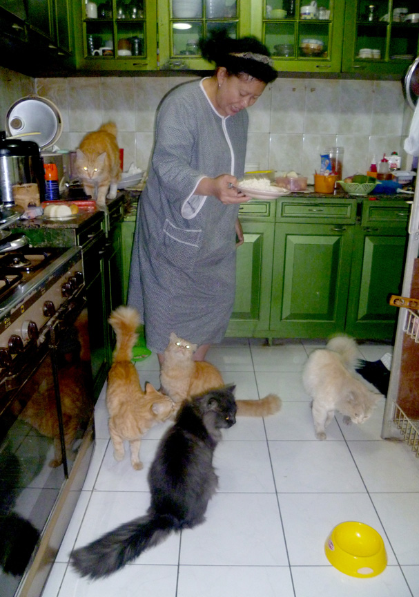 The Real Cat S Lovers It S My Mom Alby Notes