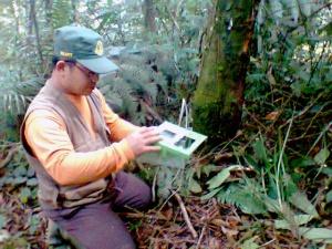 Memasang kamera trap pada salah satu pohon di kawasan TNGHS.*