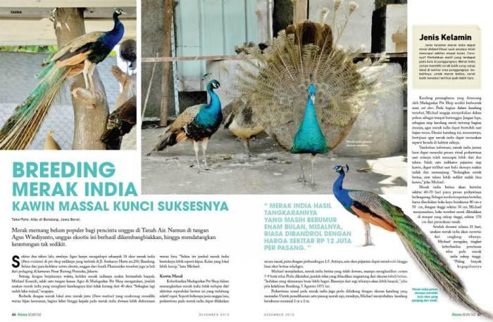 Penangkaran Merak India (Pavo cristatus) dalam Majalah Flona edisi 132, Desember 2013.