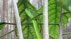 Kamuflase ular